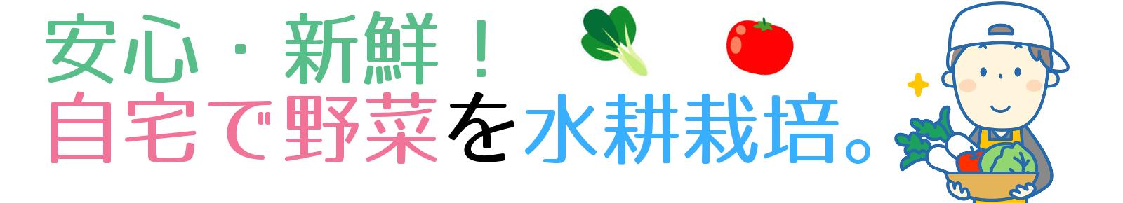 安心・新鮮!自宅で野菜を水耕栽培。